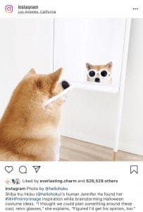 Instagram Font Dog Looking In Mirror