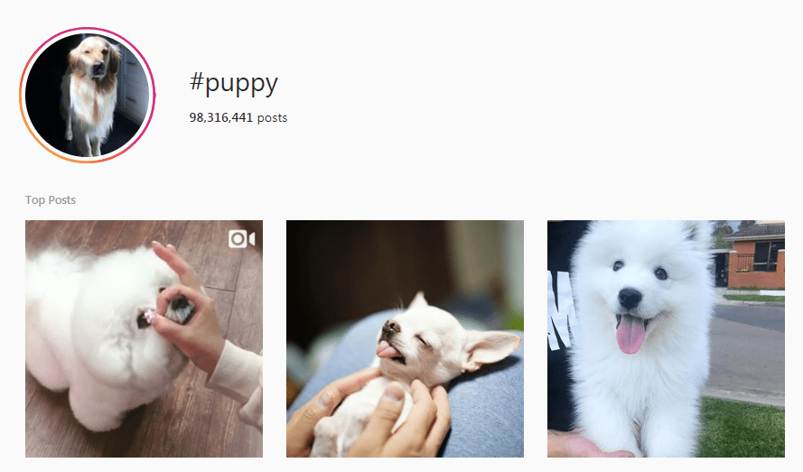 Screenshot of #Puppy hashtag