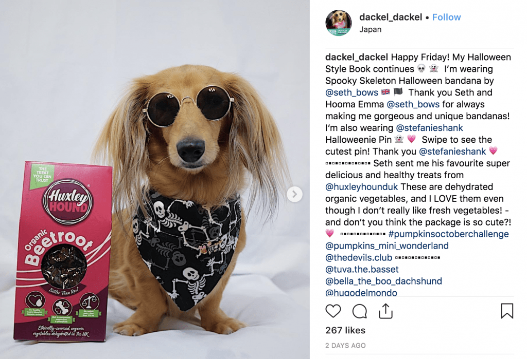 An ad post showing off gourmet dog treats