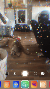 Dog Lying On Floor With Glitter Filter